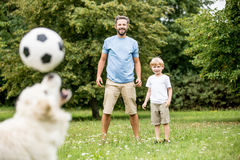 Le chien jongle le football avec le nez images stock