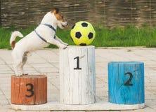 Le chien jouant le football sur le podium veut la récompense Photographie stock libre de droits
