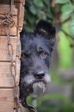 Le chien - le meilleur ami de l'homme Photo stock