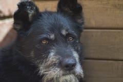 Le chien - le meilleur ami de l'homme Photos stock