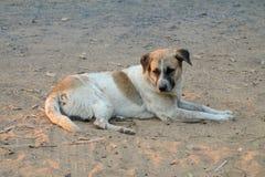 Le chien local thaïlandais, le chien recherche un propriétaire local est longtemps allé avec des yeux tristes images stock