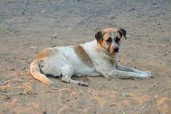 Le chien local tha?landais, le chien recherche un propri?taire local est longtemps all? avec des yeux tristes images stock
