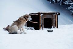 Le chien mâche un os près de la cabine pendant l'hiver Photos stock