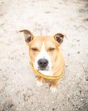 Le chien méfiant Photo stock
