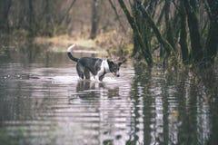 le chien méfiant joue dans l'eau - effet de film de vintage Photos libres de droits