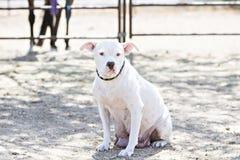 Le chien mélangé de race a juste donné naissance Photo libre de droits