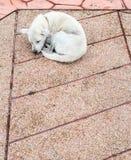 Le chien malade seul dort photographie stock libre de droits