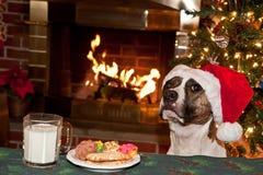 Le chien mange des biscuits de Santa. Photographie stock libre de droits