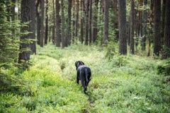 le chien marche dans la forêt Photographie stock