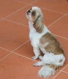 Le chien mignon Photo stock