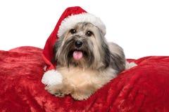 Le chien mignon de Noël avec un chapeau de Santa se trouve sur une couverture rouge Images stock