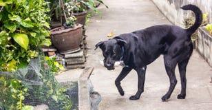 Le chien noir Images libres de droits
