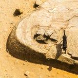 Le chien noir avec une ombre aiment une chèvre Images libres de droits