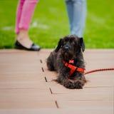 Le chien noir mignon de croisement de l'abri, de l'endroit spécial où les futurs propriétaires peuvent le choisir et de lui aura  Photo stock