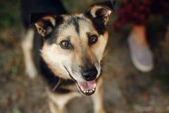 Le chien noir mignon de l'abri avec le regard étonnant observe dans la ceinture PO Images libres de droits