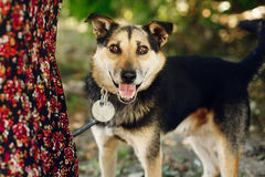Le chien noir mignon de l'abri avec le regard étonnant observe dans la ceinture PO Photos libres de droits