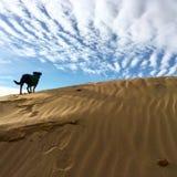 Le chien noir se tient sur la dune de sable Photos libres de droits