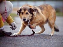 Le chien non de race de rouge coûte sur la route Photographie stock