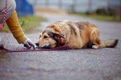 Le chien non de race de rouge se trouve sur la route Images stock