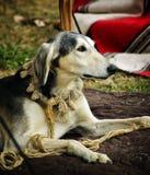 Le chien observe Images stock