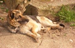 Le chien observe et garde Image libre de droits