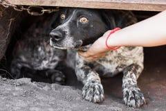 Le chien observe le plan rapproché photo stock