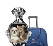 Le chien part en voyage avec ses amis Photo libre de droits