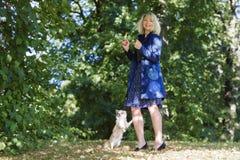 Le chien pelucheux futé répète des commandes après femme Photos libres de droits