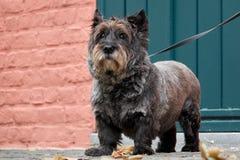 Le chien le plus fidèle attend son maître Secteur pour le texte Photo libre de droits