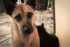 Le chien regarde l'appareil-photo et la merveille photos libres de droits