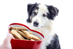 Le chien regarde la boîte en forme de coeur de festins image stock