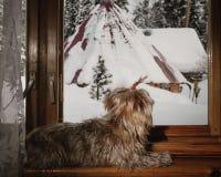 Le chien regarde la fenêtre Photos stock