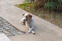 Le chien reposé à la commande de patron Pour attendre entre le patron pour parler aux collègues image libre de droits