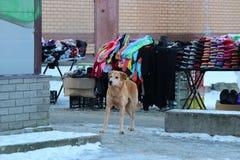 le chien roux sans abri va sur le marché de l'hiver Photographie stock