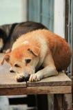Le chien sans abri image libre de droits