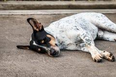 Le chien sans abri dormant sur le plancher de ciment Photo libre de droits