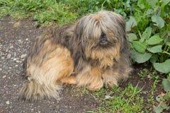 Le chien sans abri hirsute se trouve par la route Images stock