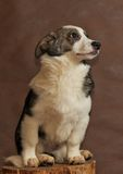 Le chien sans abri jeté par des personnes Photographie stock libre de droits