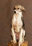 Le chien sans abri jeté par des personnes Images stock