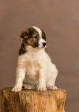 Le chien sans abri jeté par des personnes Photo libre de droits