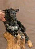 Le chien sans abri jeté par des personnes Photos stock