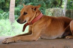 Le chien sans abri rouge se situe dans la rue Photographie stock