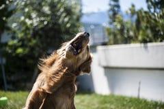 Le chien saute photo stock