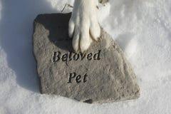 Le chien se rappelle l'ami perdu Photographie stock libre de droits