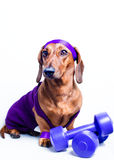 Chien et sports photo stock