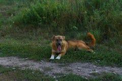 le chien se repose sur l'herbe image stock