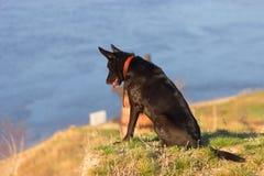 Le chien se reposent sur le coût Photos libres de droits