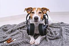 Le chien se situe dans des écouteurs sans fil sur la couverture photos stock