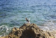 Le chien se tient sur une roche et regarde la mer Photos stock