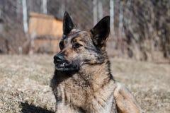 Le chien se trouve au sol Profondeur de zone photo stock